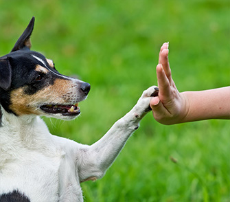 Dog touching a hand with his paw